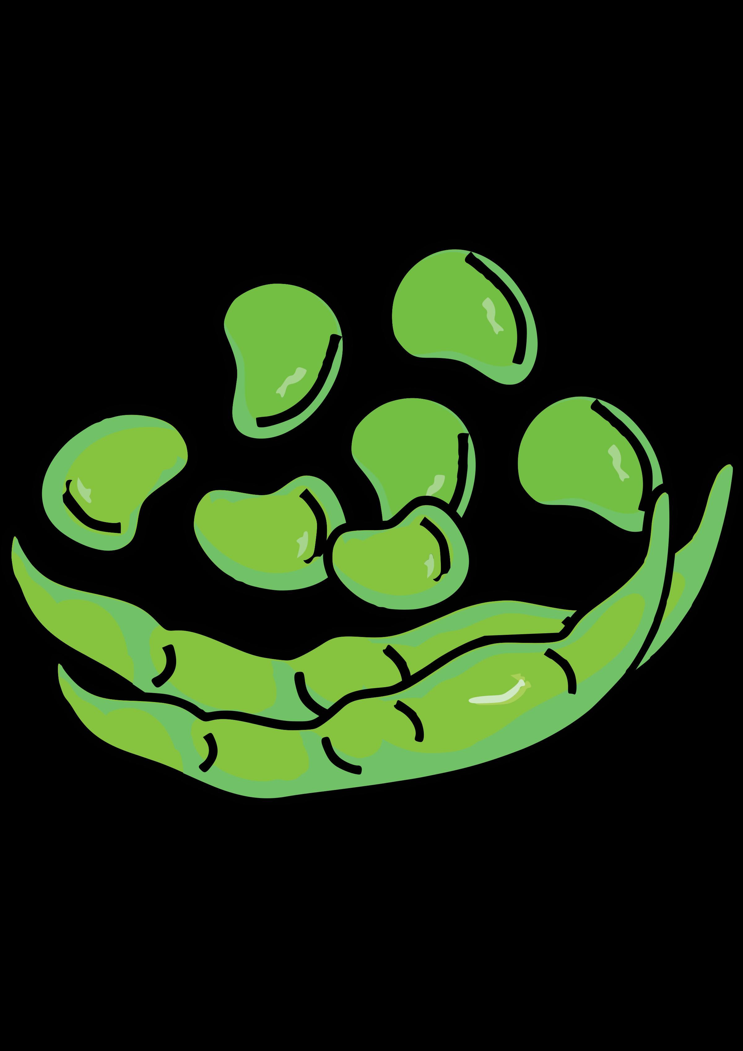 Fava beans big image. Bean clipart broad bean
