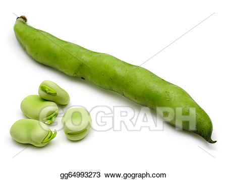 Bean clipart broad bean. Stock illustration beans gg