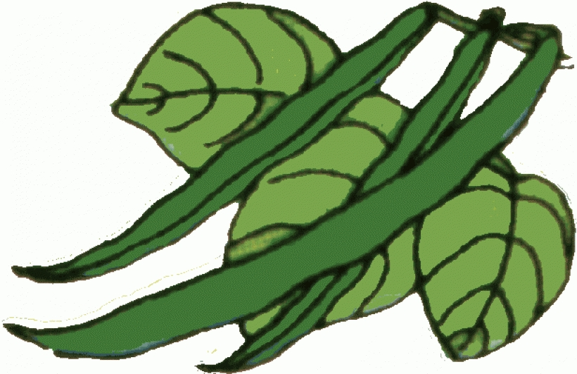 Fun green beans clip. Cabbage clipart sitaw