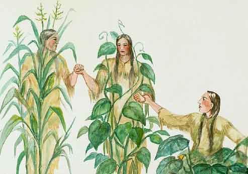 The three sisters beans. Bean clipart corn