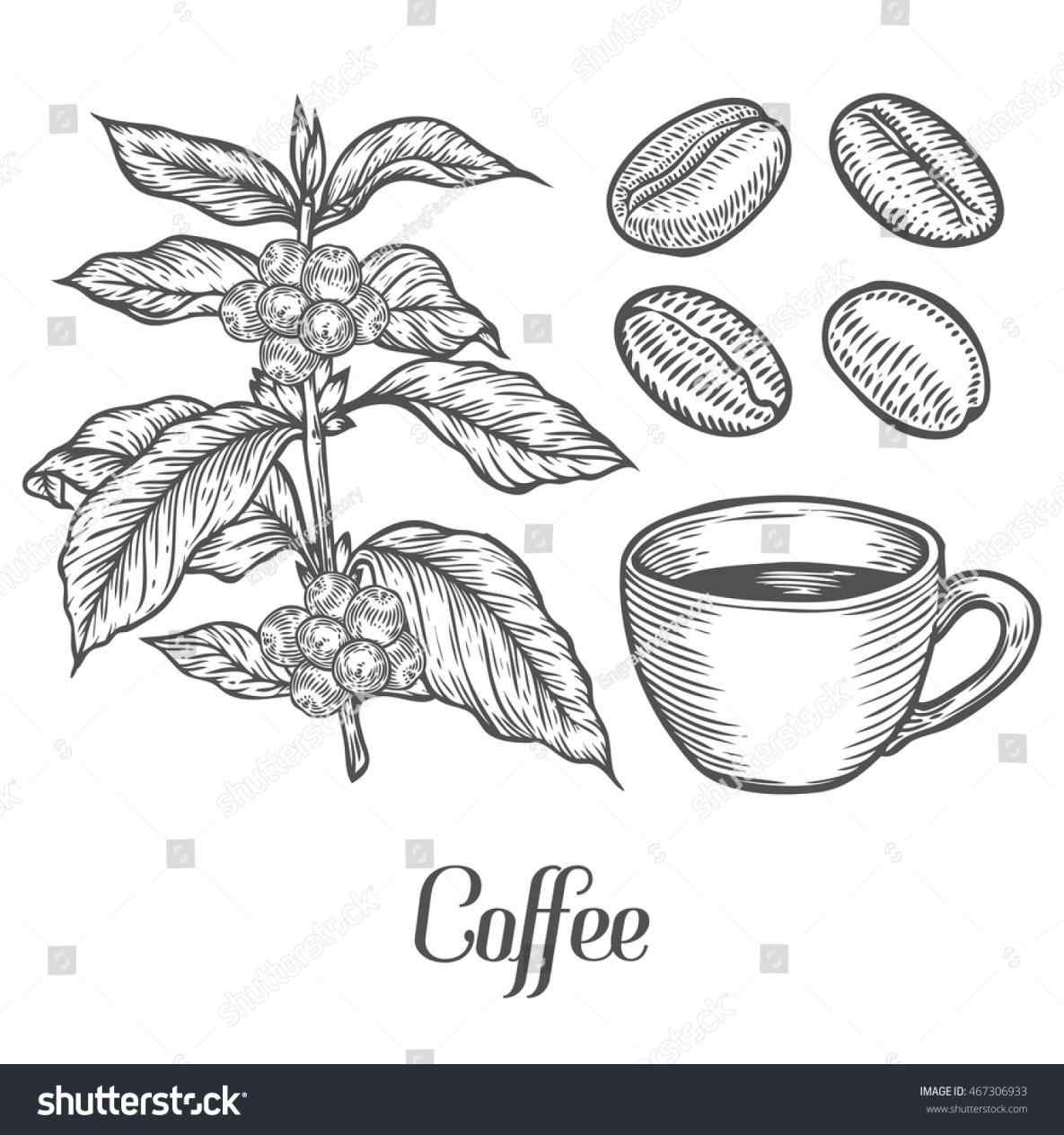 Bean clipart drawing. The images collection of