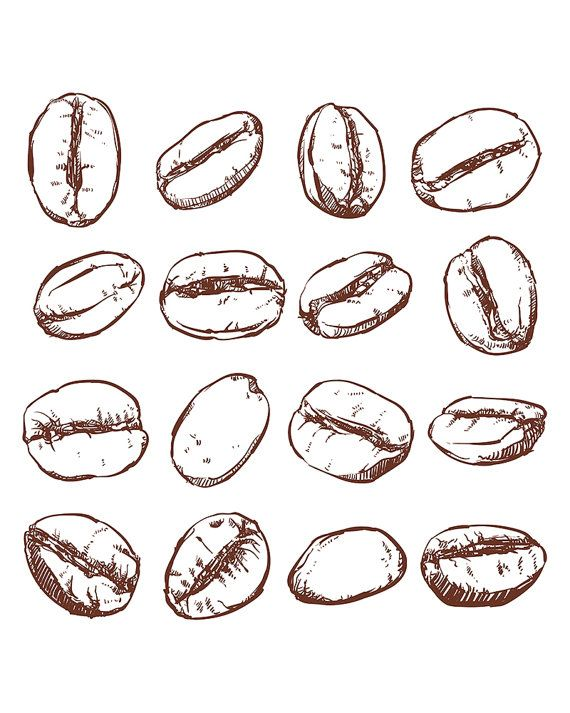 Bean clipart drawing.  best etsy food