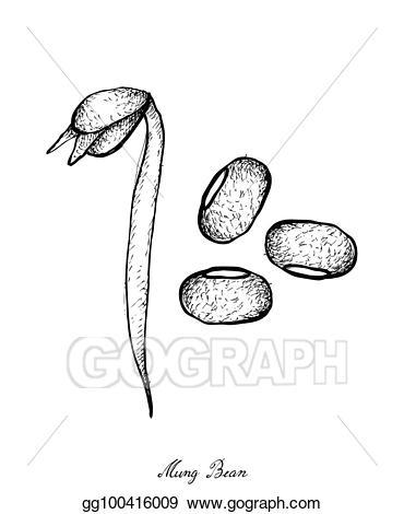 Vector illustration hand drawn. Bean clipart drawing
