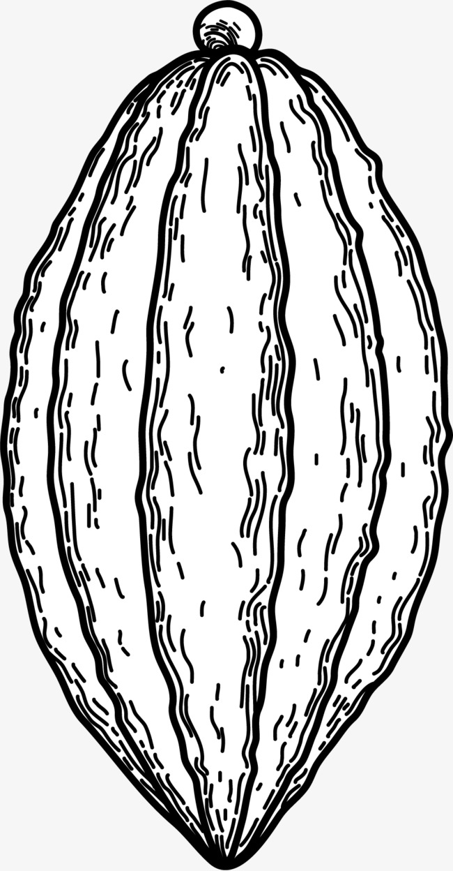 Black and white line. Bean clipart drawing