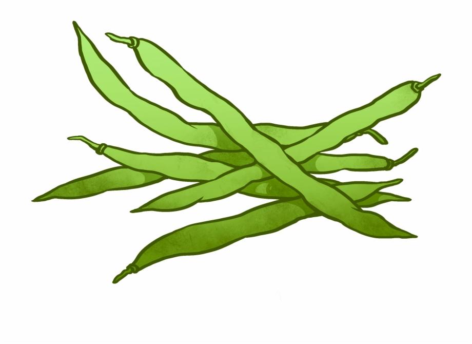 Beans clipart drawing. Peas runner bean green