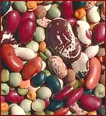 Bean clipart dried bean. Dry beans cliparts zone