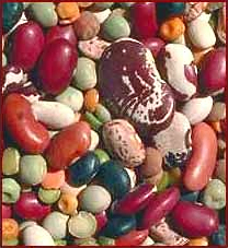Free page of public. Beans clipart dried bean