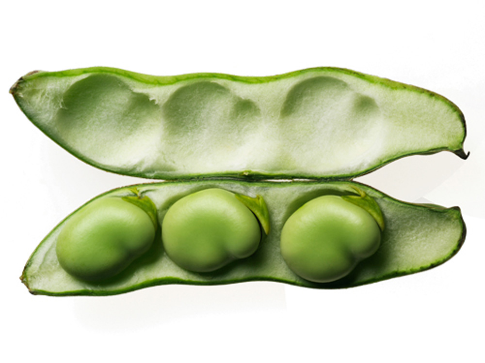 Beans clipart fava bean. Untitled on emaze what