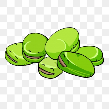 Broad png vector psd. Bean clipart fava bean