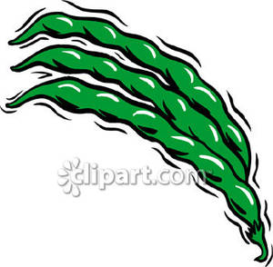 Beans royalty free picture. Bean clipart green bean