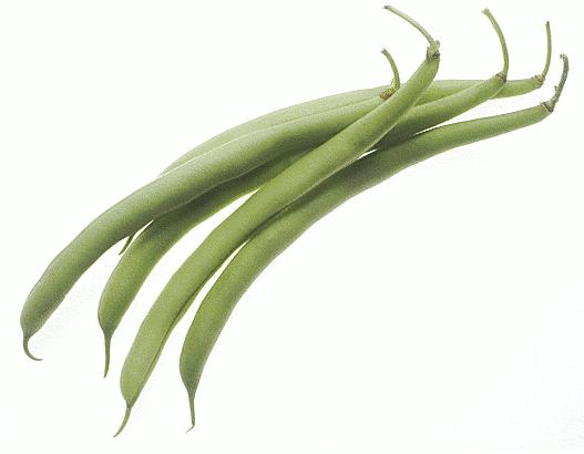 Bean clipart green bean. Free string cliparts download