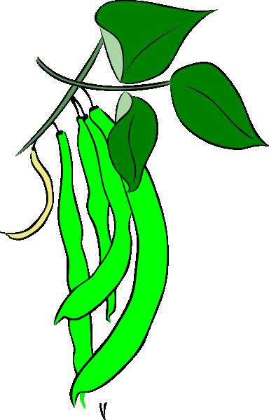 Bean clipart green bean. French clip art at