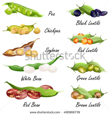 Pea lentil pencil and. Beans clipart pulse