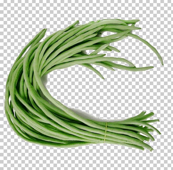 Yardlong common runner vegetable. Bean clipart long bean