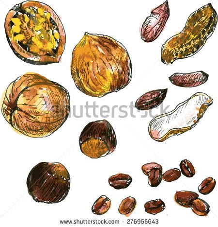 Stock vector set of. Beans clipart nuts