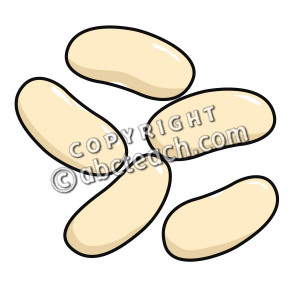 Clip art beans navy. Bean clipart nuts