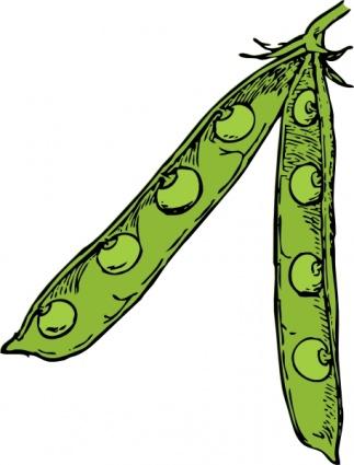 Plant panda free images. Bean clipart pea