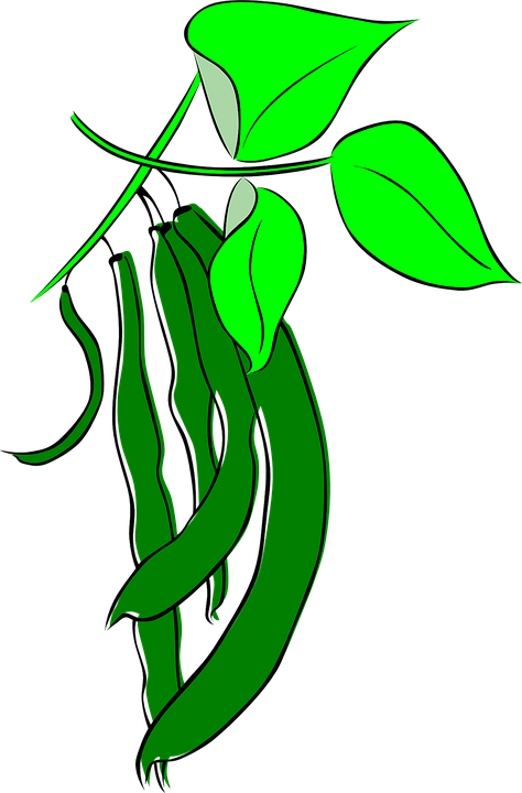 People shop of cliparts. Bean clipart pea