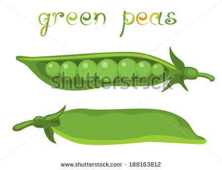 Bean clipart pea. Beans plant download