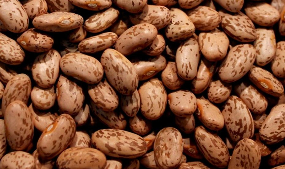Free cliparts download clip. Beans clipart pinto bean