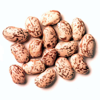 Beans clipart pinto bean. Free cliparts download clip