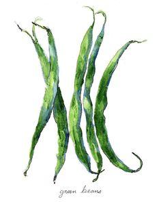 Bean clipart runner bean. Green beans original watercolor
