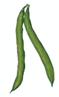 Beans clipart runner bean. Free vegetable pages of