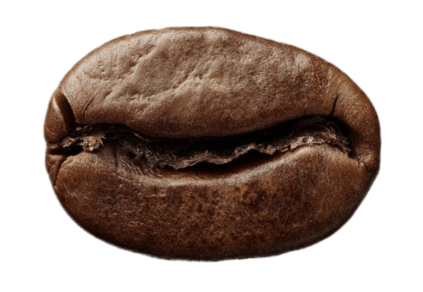 Roasted coffee transparent png. Bean clipart single