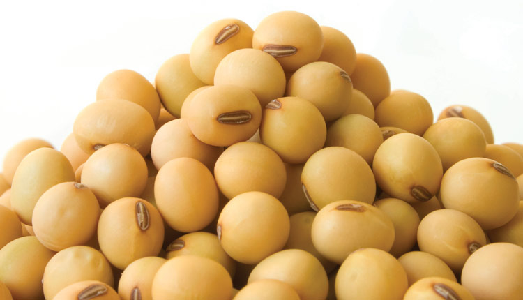 Seed png transparent images. Bean clipart soybean