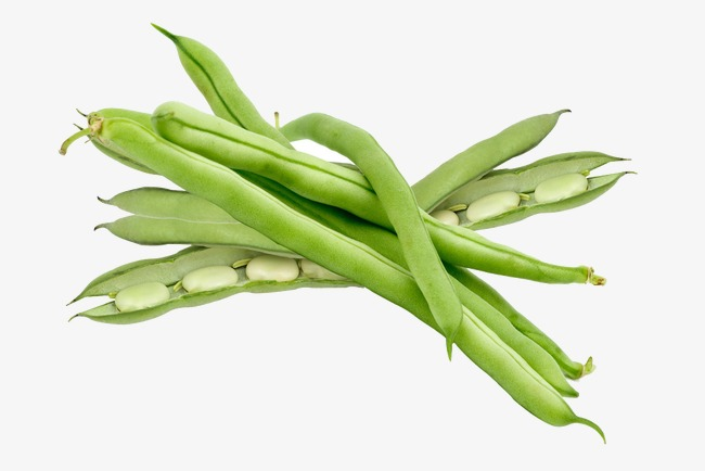 String station . Beans clipart green bean