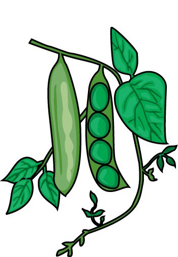 Panda free images plant. Bean clipart string bean