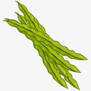 Beans green . Bean clipart string bean