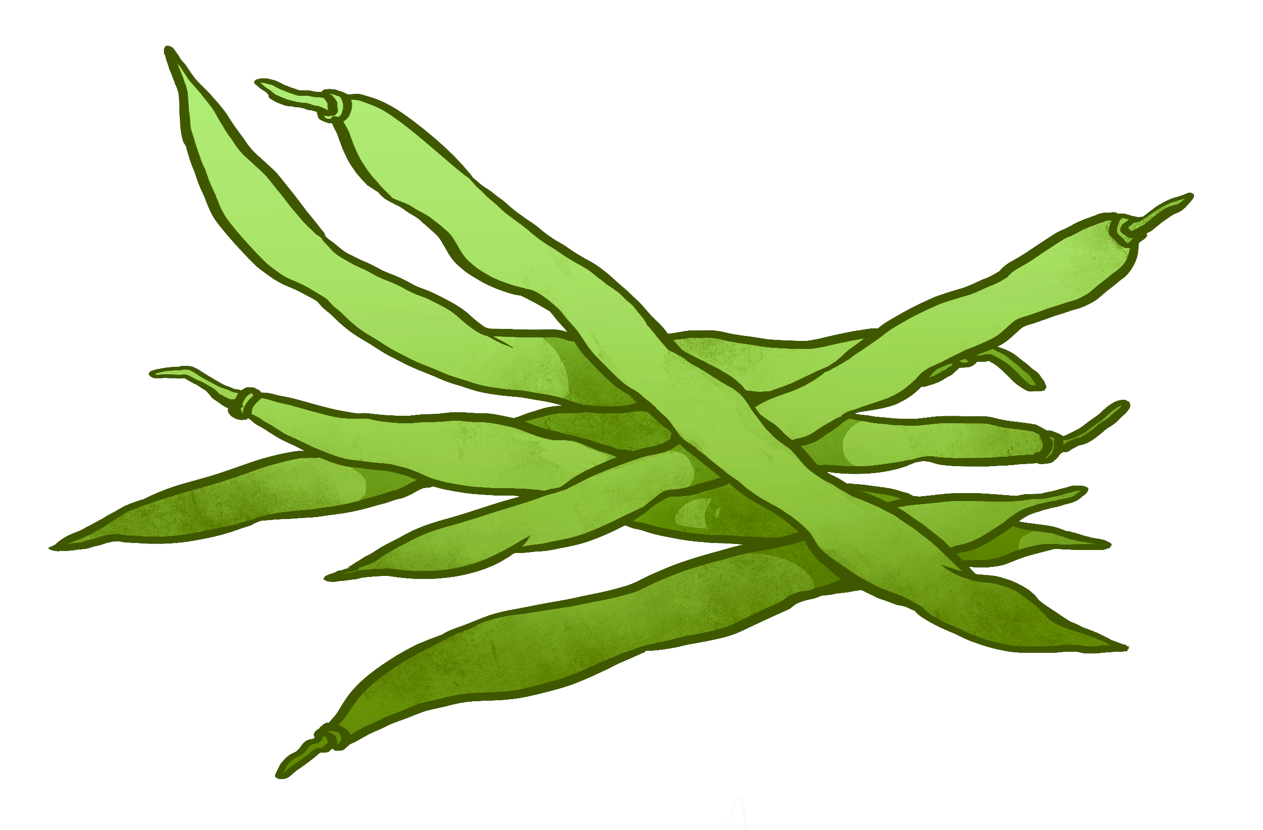 Bean clipart string bean. Beans drawing at getdrawings