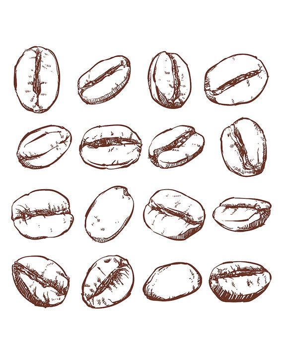 Bean clipart vector. Coffee isolated hand drawn