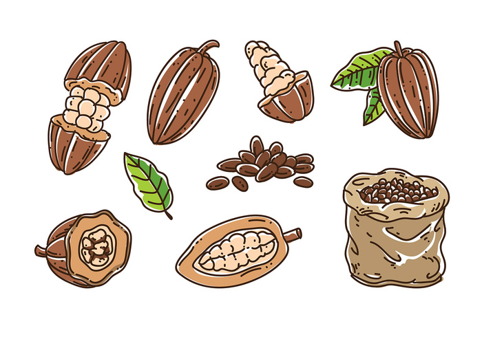 Bean clipart vector. Cocoa seed pencil and