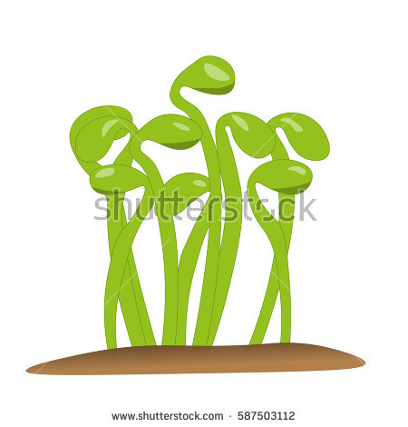 Pulse sprout free collection. Bean clipart vector