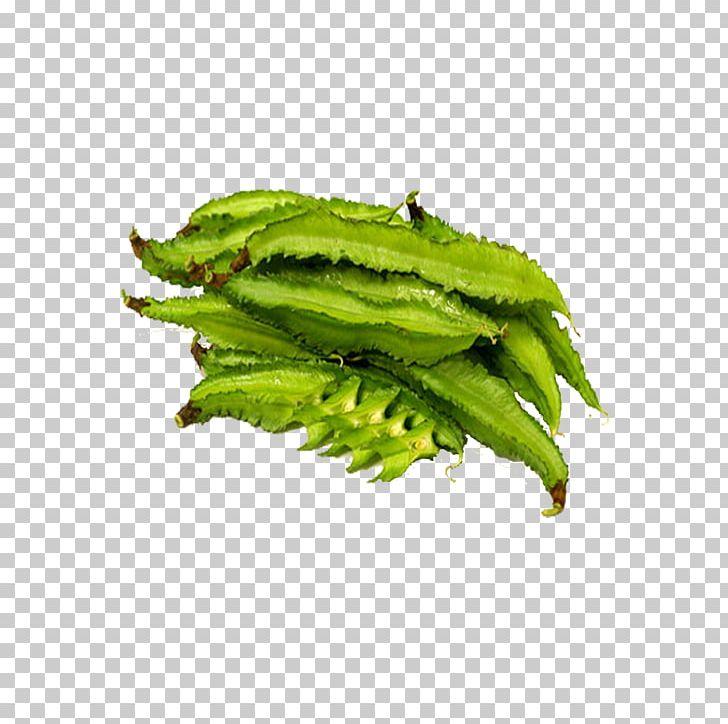 Leaf vegetable edamame png. Bean clipart winged bean