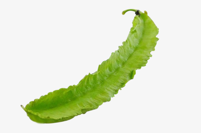 A fresh definition pictures. Bean clipart winged bean