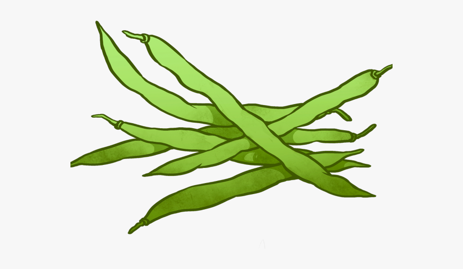 String bean green . Beans clipart