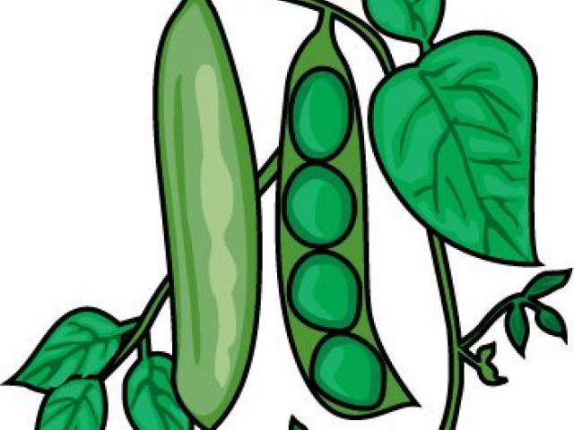 Free download clip art. Beans clipart bataw