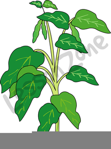 Beans clipart bean plant. Free of lima images