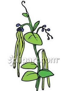 Panda free images . Beans clipart bean plant