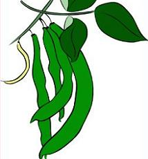 Free green plants. Beans clipart bean plant