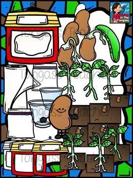 Beans clipart bean pod. Lima plant life cycle