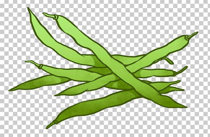 Runner bean lima green. Beans clipart beens