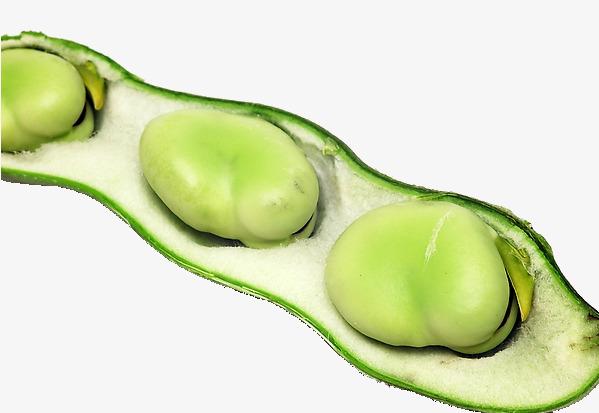 beans clipart broad bean