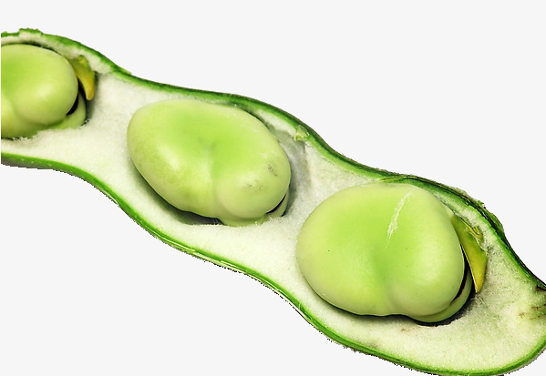 Fresh strictosidine green vegetables. Beans clipart broad bean