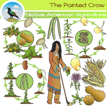 Agriculture clipart food. Native american corn beans