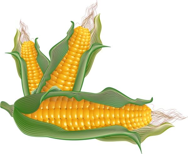 Beans clipart corn.  best vegetable clip