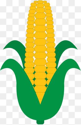 Peas and png vectors. Beans clipart corn